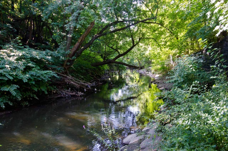 Summer on the Bronx River in the Woodlawn Heights neighborhood of the Bronx.