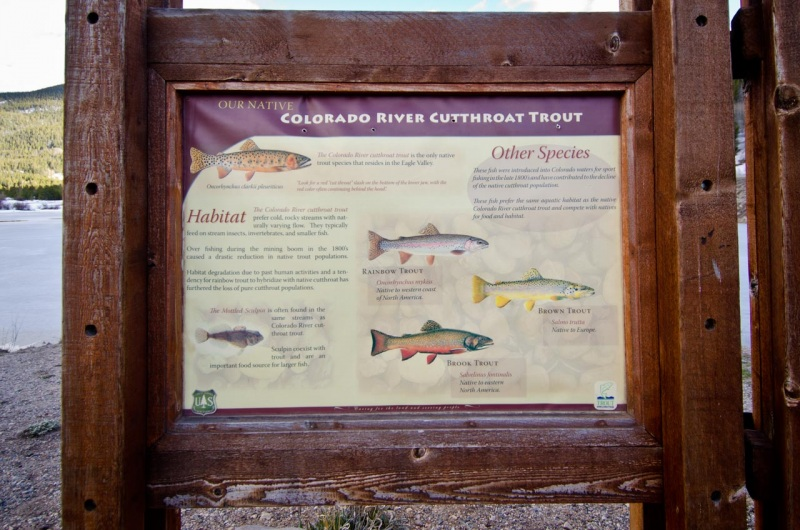 US Forest Service informational sign about native and non-native fish species found in the Eagle River and its tributaries.