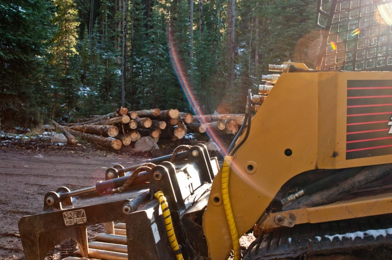 A logging operation harvests century old lodgepole pine trees in the White River National Forest.