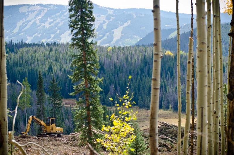 Forest removal operations with views of ski runs on Vail Mountain in Colorado.