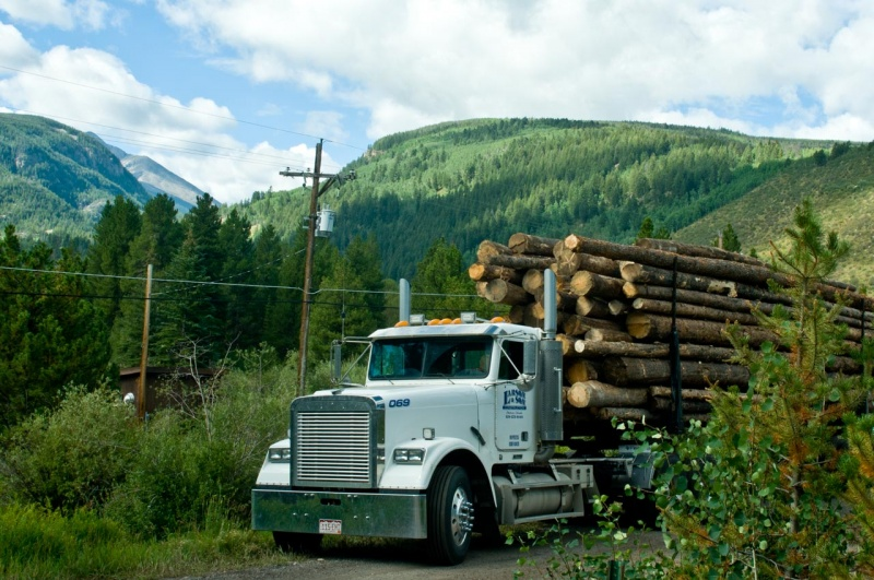A logging truck loaded with lodgepole pine trees harvested from the White River National Forest.