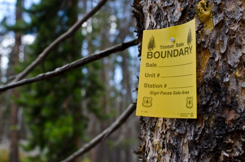 Before removing a forest, a logging crew will mark the boundaries of the clear cut with posted signs like this one in Northern Colorado.