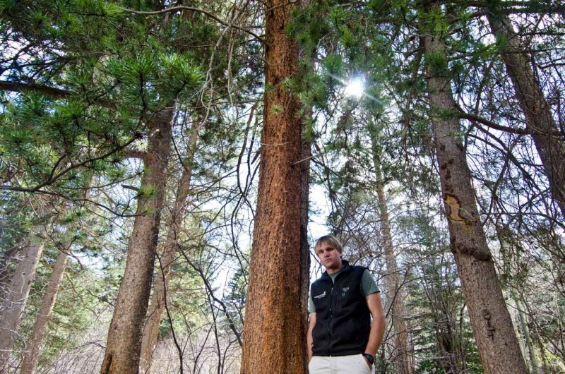 Naturalist and environmental activist Peter Suneson stands in a lodgepole pine forest.