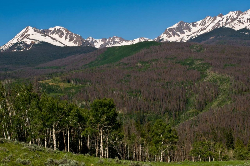 The Gore Range from Summit County Colorado and forests of lodgepole pine in red phase Mountain Pine Beetle infestation.