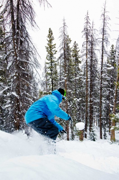 Snowboarding in a lodgepole pine forest in Eagle County, Colorado.