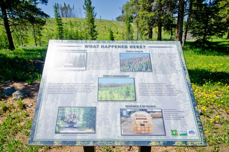 An informational sign installed by the US Forest Service at the edge of a forest removal project in Colorado.