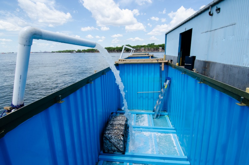 Shipping containers at Red Hook Terminal in Brooklyn being filled with seawater to transport live oyster spat on shell to the oyster reef restoration site in Soundview New York.