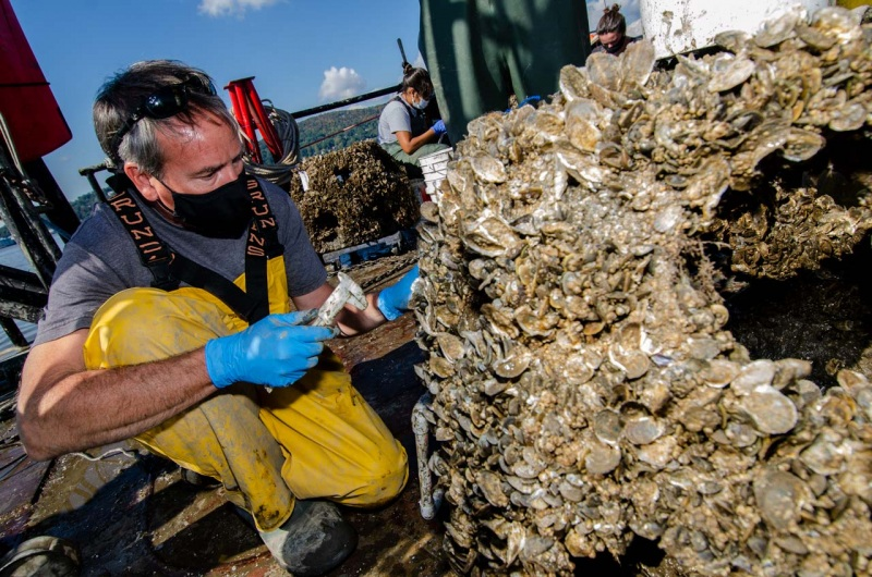 Jim Lodge, Senior Scientist at the Hudson River Foundation, collects data on the wild oyster restoration project in the Hudson River.