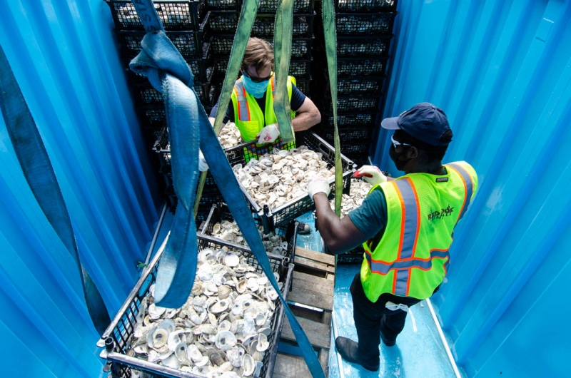 Billion Oyster Project Executive Director Pete Malinowski loads loose oyster shells into shipping containers at Red Hook Terminal for transport up the East River in New York City to a Billion Oyster Project oyster reef restoration in Soundview.