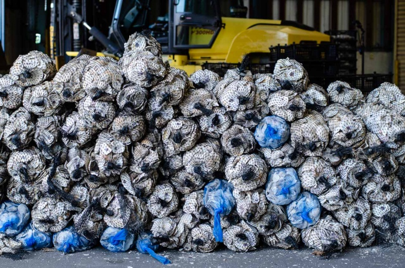 Billion Oyster Project collects oyster shells from NYC restaurants to restore oyster reefs in New York harbor as one way of mitigating the impacts of storm surge due to the climate crisis.