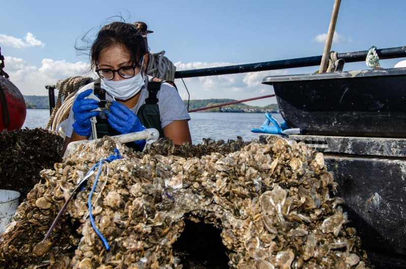 Tatiana Castro, Restoration Field Coordinator at Billion Oyster Project, collects and records data from a wild oyster reef restoration project on the Hudson River.