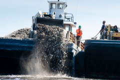 Oyster shells collected by Billion Oyster Project being used to restore oyster reefs in New York City.