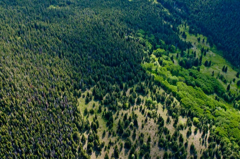 Aerial view of morning light illuminating a mixed conifer and aspen forest in Northern Colorado.