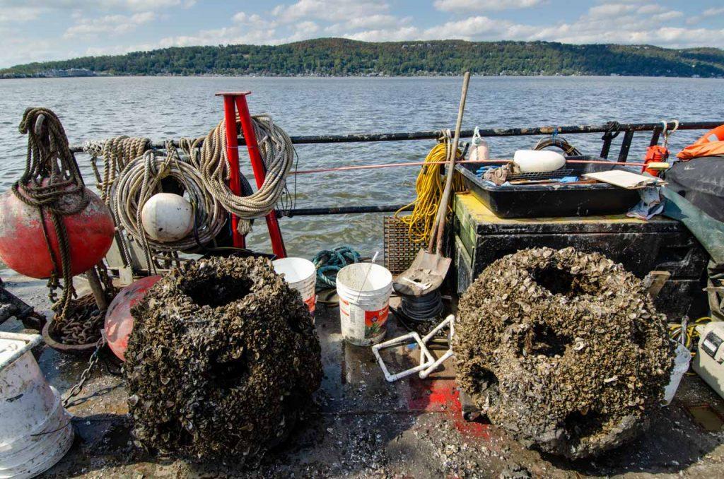 Oyster Reef Restoration on the Hudson River