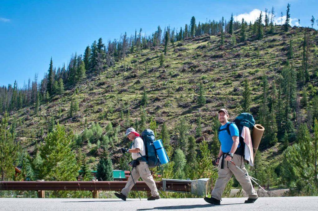 Clear Cut on the Colorado Trail
