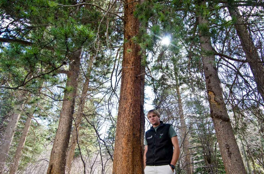 Peter Suneson in a Lodgepole Pine Forest