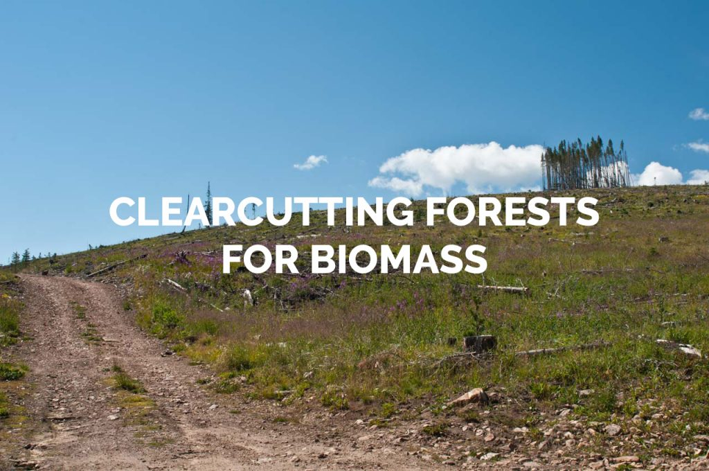 Clearcutting Forests for Biomass Gallery