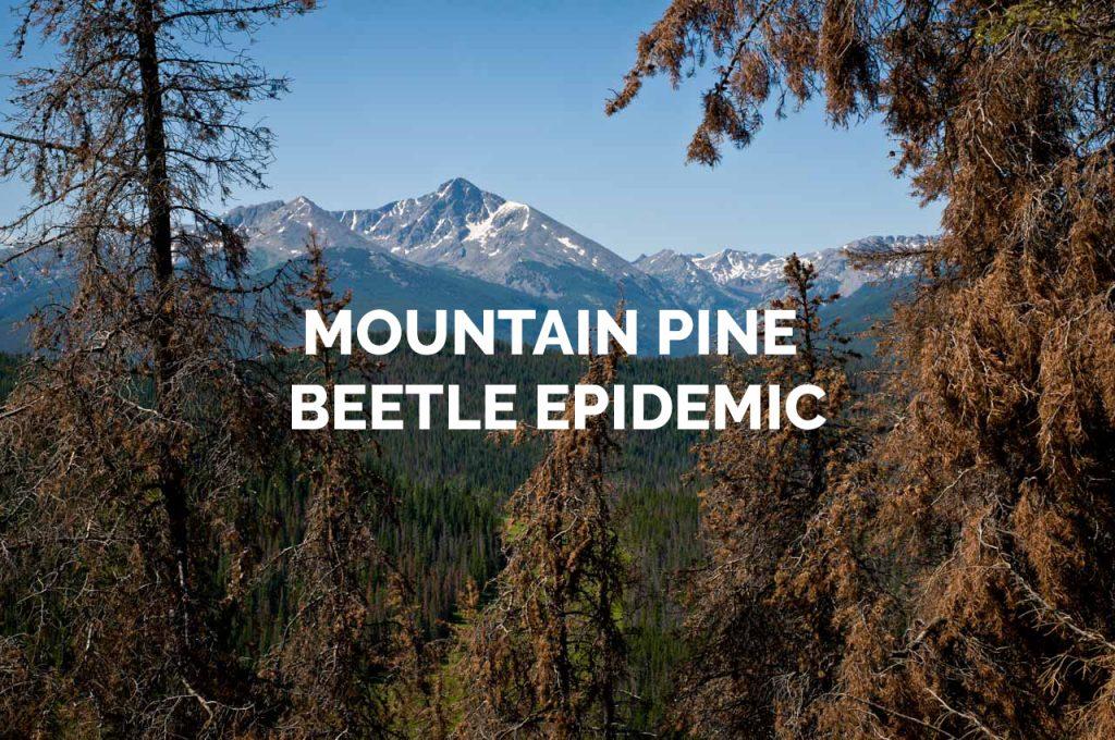 Mountain Pine Beetle Epidemic Gallery