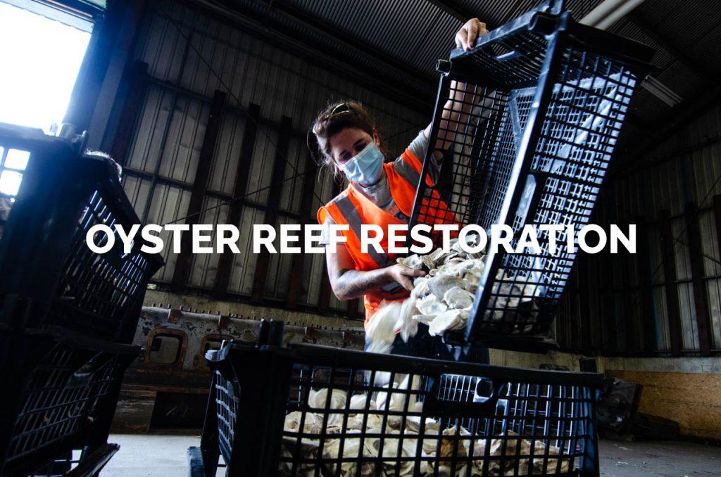 Oyster Reef Restoration Gallery