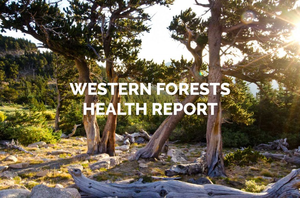 Western Forests Health Report Gallery